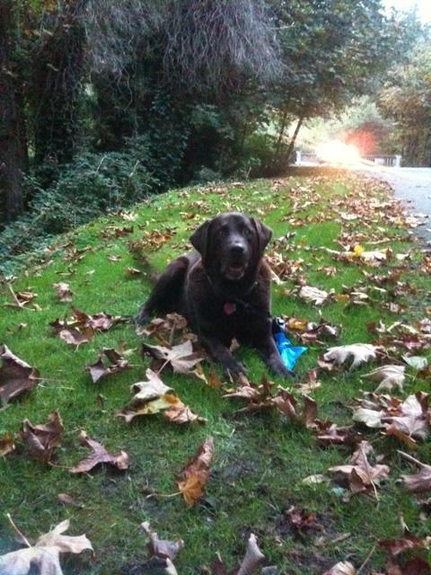 Rufus:Fall