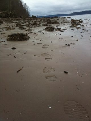 Palisades beach