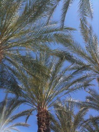 Dreams of Palms