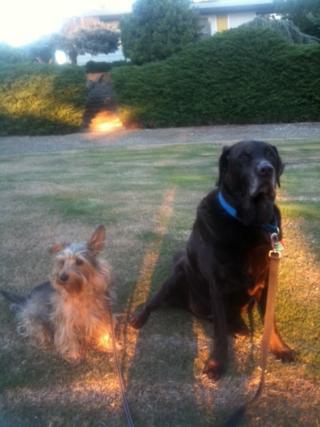 Rufie & Scoutphoto[15]